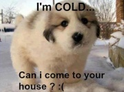 Latest Funny Jokes Picture of It is cold